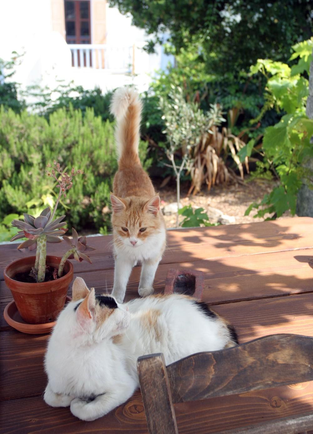 Chats d'une maison de Hora, Mykonos