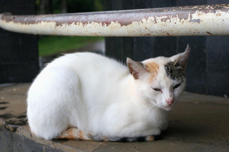 Chat à l'abri d'une averse, Parc national des Gorges de la Rivière noire