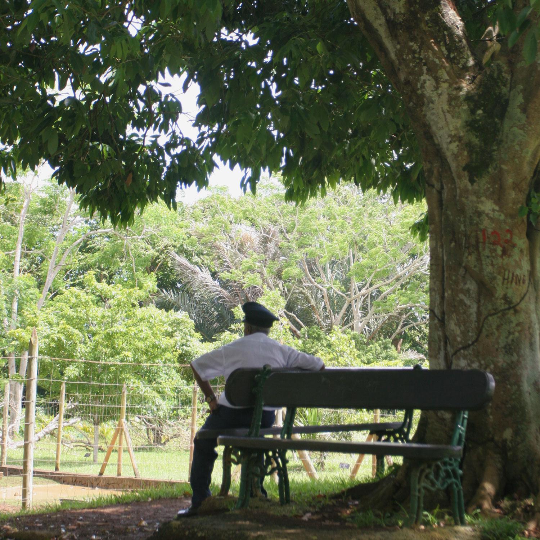 Gardien sur un banc du jardin botanique de Pamplemousses (Île Maurice)