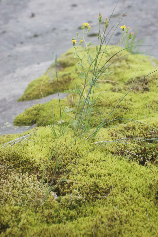 Paysage de mousse et de fleurs, chutes de Leikanger